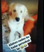 Köpeğin gözüne deodorant sıkan kişi sosyal medyada büyük tepki gördü