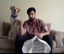 Köpeğinin gözüne dedorant sıkan gençten işkence açıklaması