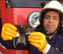 Havalandırma boşluğuna düşen kuşu itfaiye kurtardı