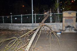 Şiddetli fırtınada ağaç devrildi