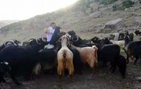 Bingöllü çobana Malatya'dan rakip