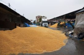 Buğday pazarında yağmur zarara yol açtı