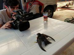 Dışarıda yattığı sırada başına ebabil kuşu düştü
