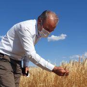 Arguvan'da hasat zamanı