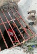 Menfeze düşen yavru köpekler kurtarıldı
