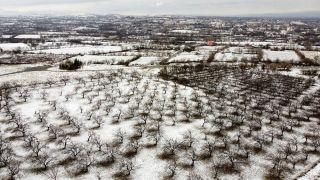 Malatya'da kayısı ağaçlarına beyaz gelinlik