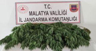 Malatya'da 10 kilo esrar ele geçirildi
