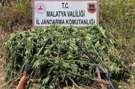 Jandarma'dan kenevir operasyonu